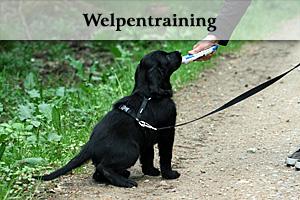 Welpentraining